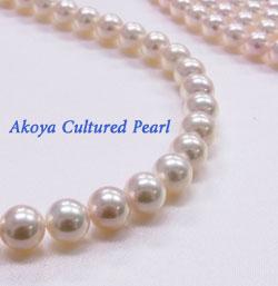 アコヤ真珠 Akoya Cultured pearl